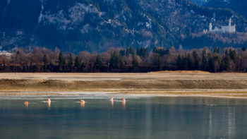 https://www.allgai.de/wp-content/uploads/flamingos-forggensee-20160206-350x197.jpg